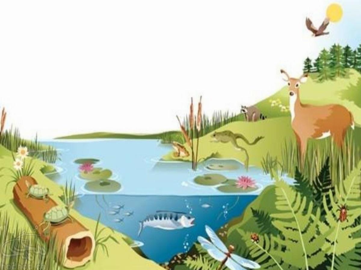 الفبای محیط زیست، بخش نخست: اکوسیستم یا نظام زیست بومی چیست؟