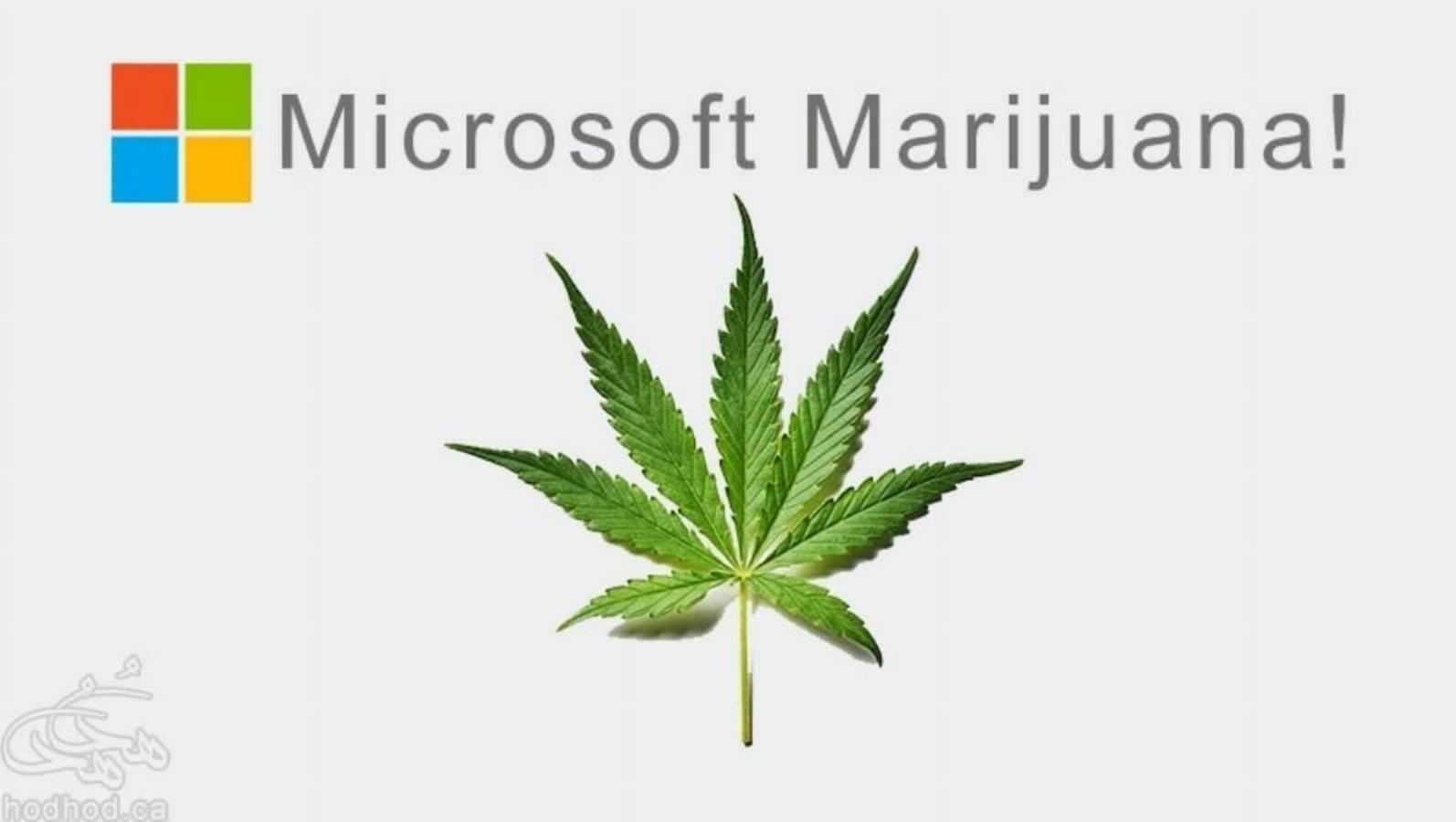 پس از خرید لینکدین، اکنون مایکروسافت به فروش ماری جوانا کمک میکند!