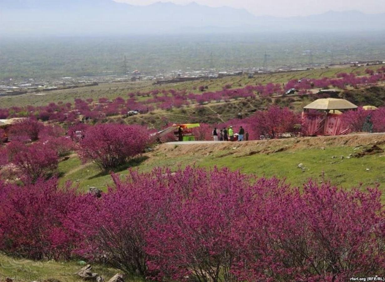 جشن ارغوان گل غندی ولایت پروان، افغانستان