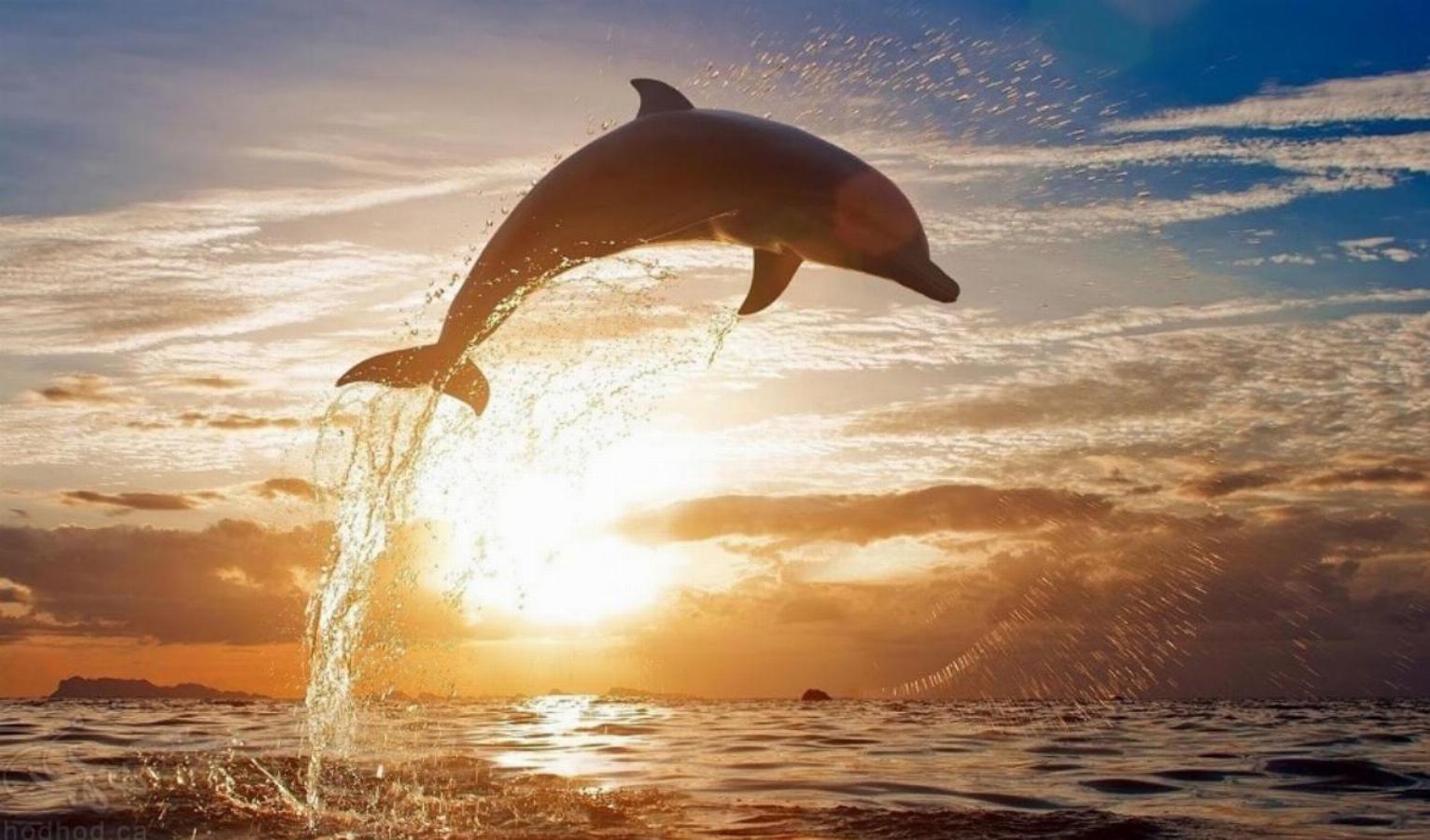 انسان ها و دلفین ها