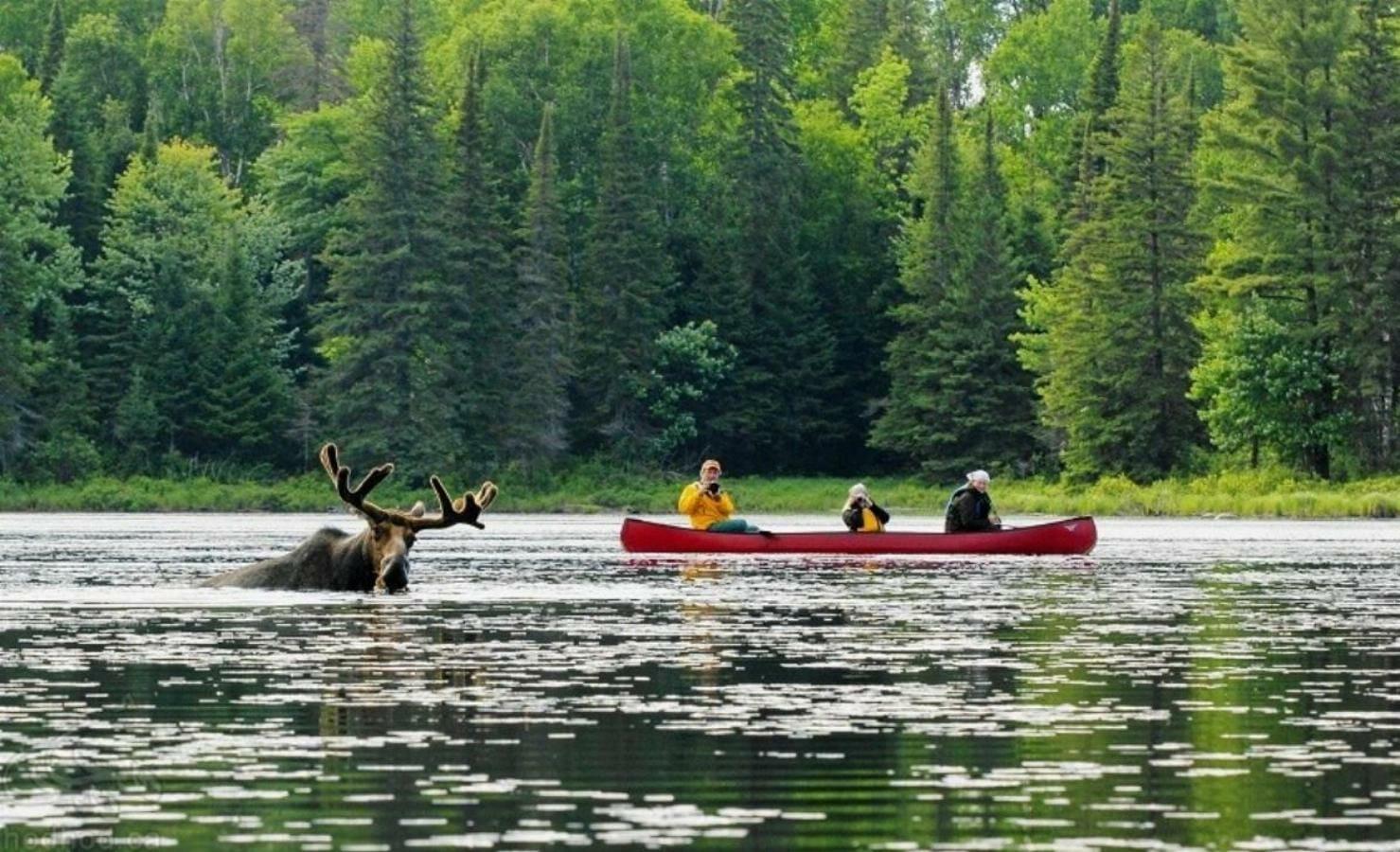 جاذبه های گردشگری کانادا: پارک جنگلی آلگانکوین
